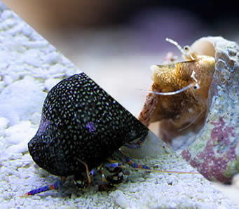 escargots/chitons